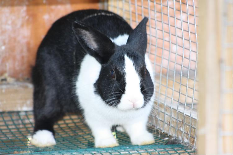 bunny562